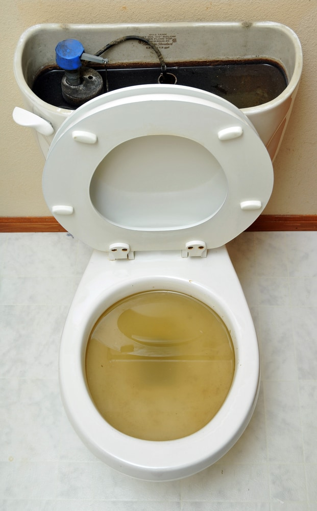 Fixing Toilet Overflow Water Damage At Your Business Roth Companies